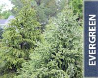 Evergreen_200x160Button